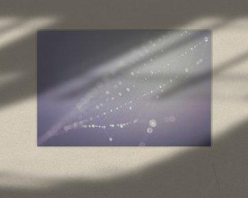 Spider web water drops (spinnenweb) sur Kristian Hoekman