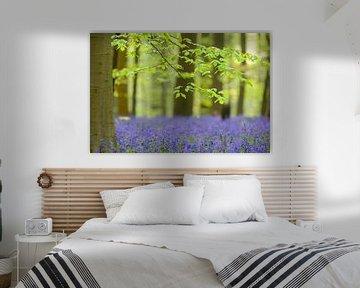Arbre de hêtre au printemps dans une forêt de Bluebell. sur Sjoerd van der Wal