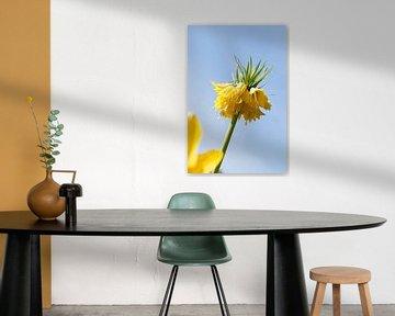 gele bloem von Karin Keesmaat Kijk-Kunst