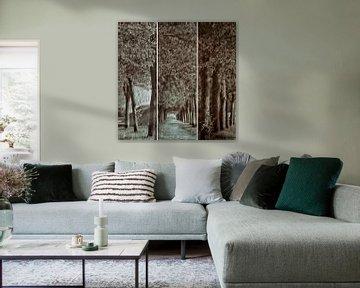 triptique de l'avenue des arbres von Yvonne Blokland