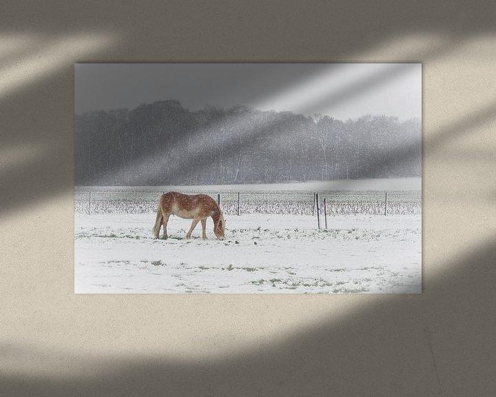 Sfeerimpressie: Grazen in de sneeuw van Mark Bolijn