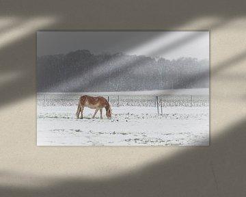 Grazen in de sneeuw