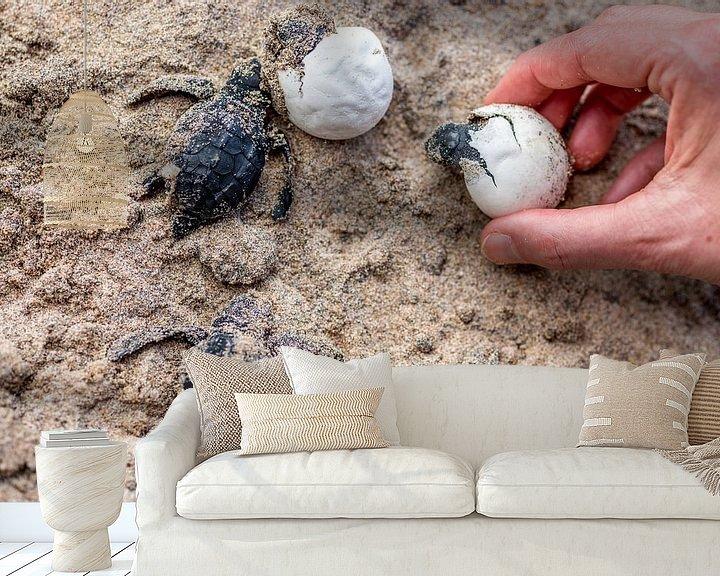 Sfeerimpressie behang: Kleine schildpadjes die net uit het ei geboren worden in Sri Lanka van Hein Fleuren