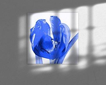 Tulp blauw van Jessica Berendsen