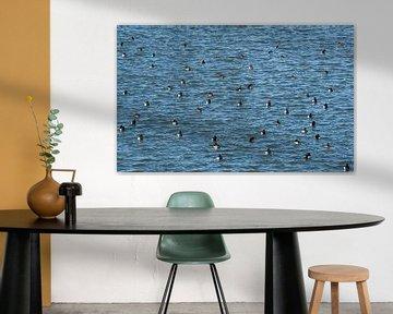 A Flock of waterbirds