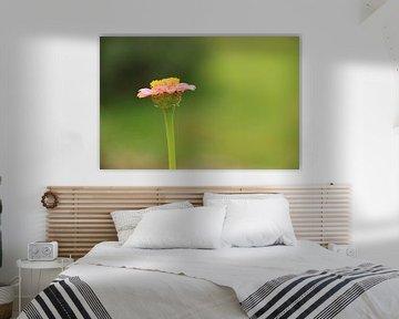 Solitaire flower van Marcel van Rijn