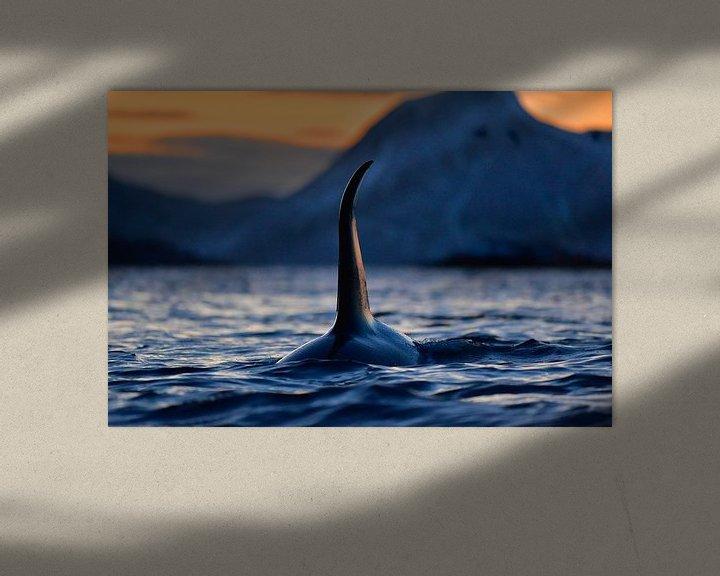 Sfeerimpressie: Indrukwekkende orca met enorme rugvin in de Noorse fjorden  van Koen Hoekemeijer