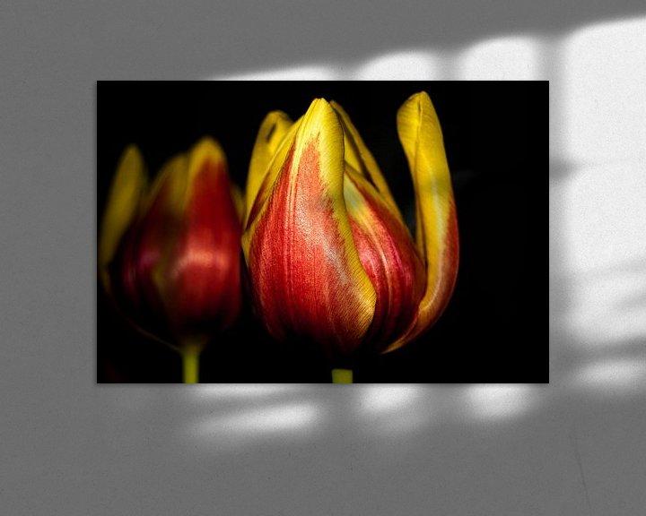 Sfeerimpressie: Tulp van Saskia Cloo-Hartsema
