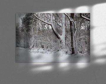Verschneiter Wald. von Vanessa Devolder