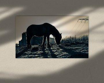 Last daylight silhouette van Ingeborg Ruyken