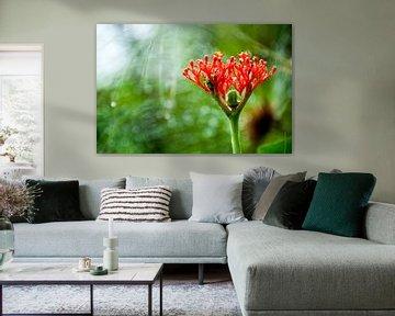 Tropische plant, Suriname