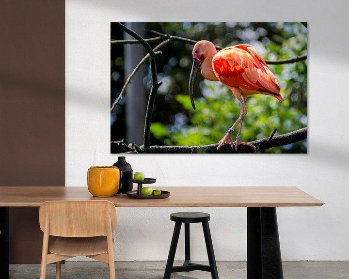 Sfeerimpressie: Rode Ibis met roze veren van Ton de Koning