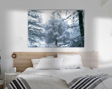 boom doorkijk van Alfred Stenekes