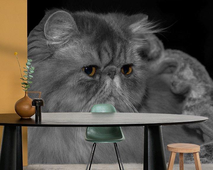 Impression: Persian kitten I sur noeky1980 photography
