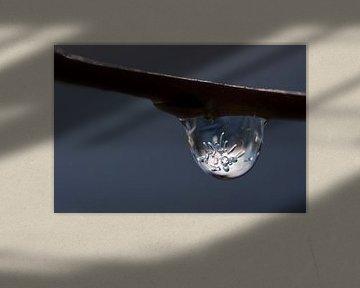 Bevroren dauwdruppel I van Eric Van Hout