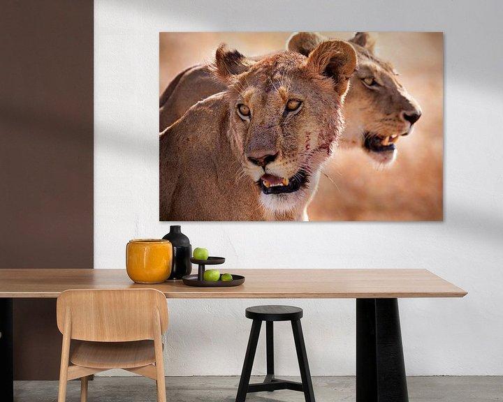 Sfeerimpressie: leeuwen van Paul Jespers