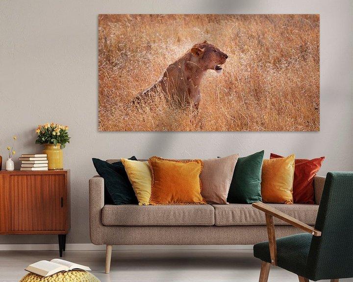 Sfeerimpressie: leeuwin in het hoge gras van Paul Jespers
