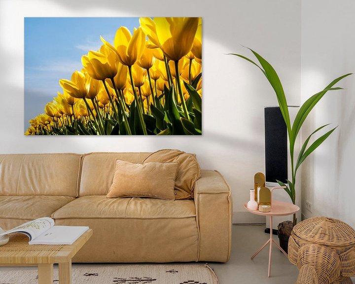 Sfeerimpressie: Veld gele tulpen van Ton de Koning