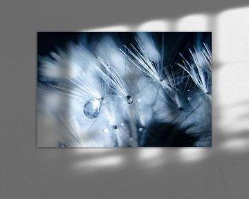 Waterdruppels op een paardenbloem van Ricardo Bouman
