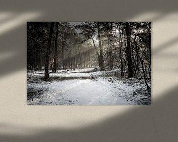 Ochtendstralen in besneeuwd bos van Erik Rudolfs