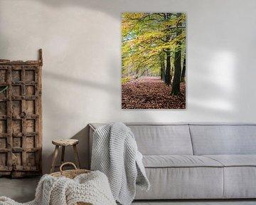 Herbst im Wald von Ricardo Bouman
