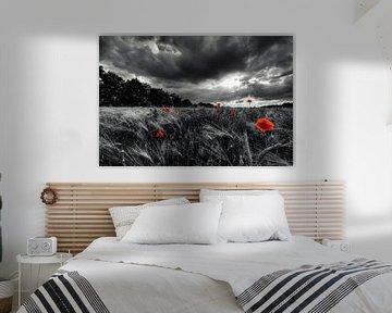 Poppy before the storm van Malte Pott