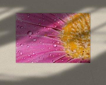 Gouttes sur une fleur sur FotovanHenk