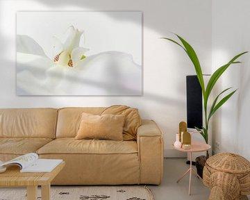 Witte orchidee, detailopname van Rietje Bulthuis
