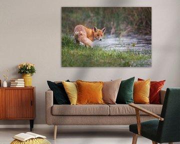 it's raining cats and foxes von Pim Leijen