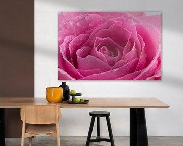 Prachtige roos met water druppels van Saskia Bon