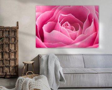 Prachtige roze roos close-up van Saskia Bon