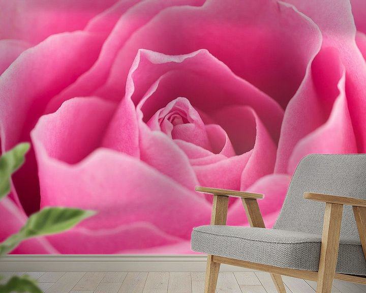 Sfeerimpressie behang: Prachtige roze roos close-up van Saskia Bon