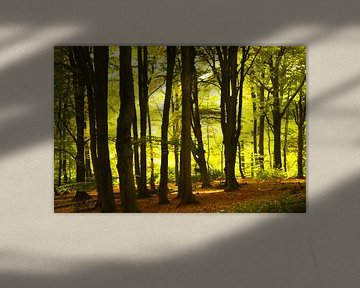 Zon door de bomen van Sharon Jansen