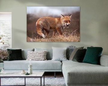 Fox von Nico Garstman