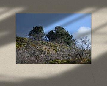 Bomen in duingebied van Ronald H