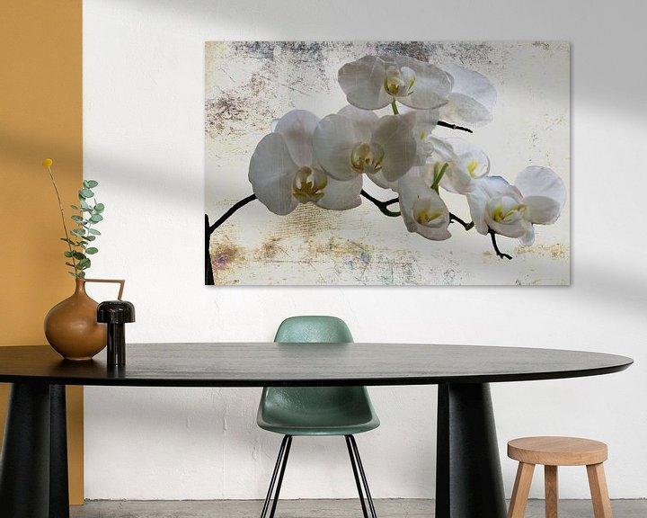 Beispiel: Ganz in weiss..... - Weiße Orchideen von Christine Nöhmeier