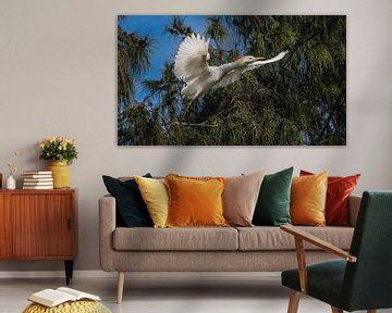 Ibis van Harrie Muis
