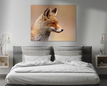 red fox von Pim Leijen
