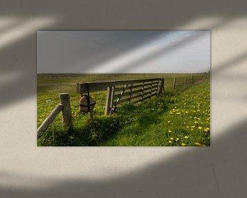 Weiland vol gele paardenbloemen aan de waddenkant van Vlieland von Marijke van Eijkeren