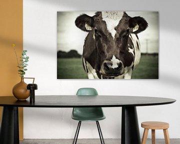 A cow – Eine Kuh!