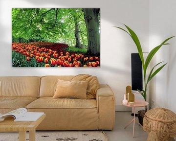 Tulpenveld slingerend onder de bomen van de Keukenhof van Albert van Dijk