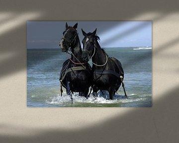 KNRM Paarden in zee