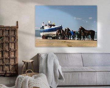 KNRM Ameland trekpaarden