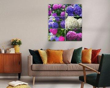 Hydrangea (Hortensia) van Inge Hogenbijl
