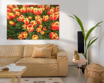 Red and Yellow tulips van Marcel van Rijn