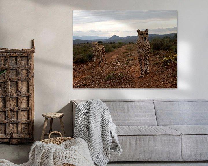Beispiel: Cheetah's op jacht von Roos Vogelzang