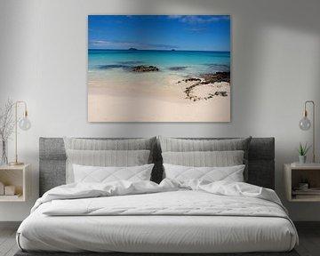 Prachtig strand, Galapagos van Roos Vogelzang
