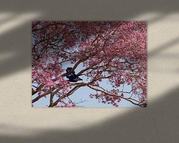 Blauwe papegaaien in roze boom van Roos Vogelzang