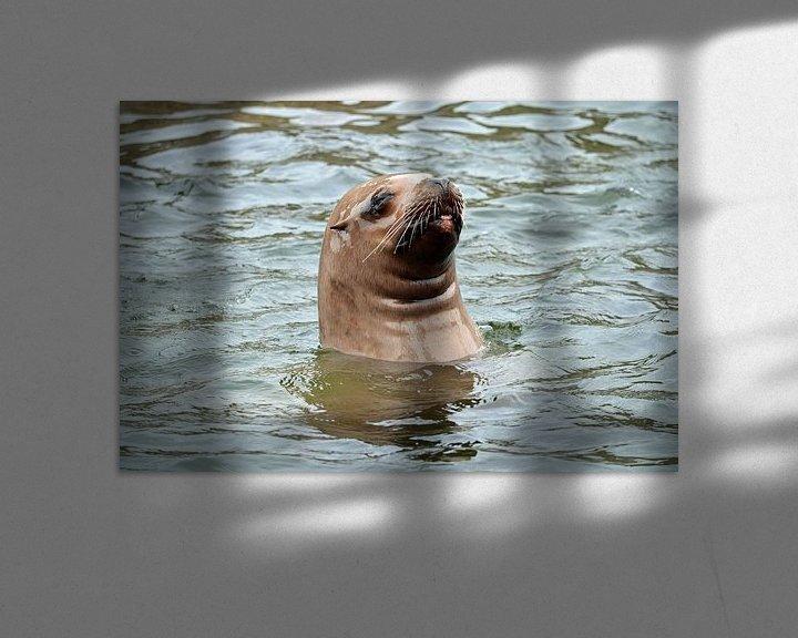 Sfeerimpressie: Steller Zeeleeuw kijkt boven water en steekt tong uit van Ronald H