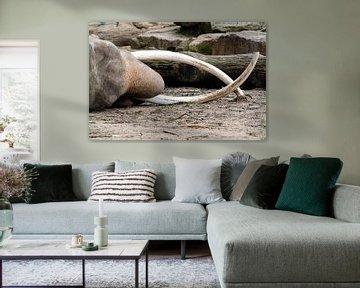 Olifant von Ab Wubben